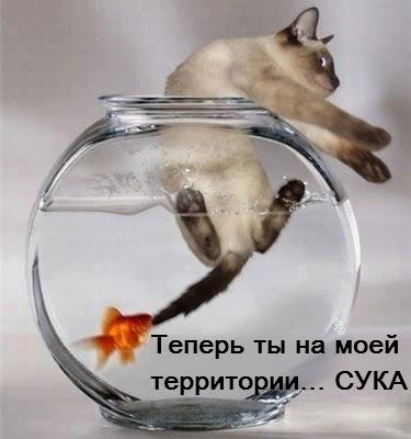 Название: котэ-аквариум-рыба-песочница-135847.jpeg Просмотров: 712  Размер: 64.2 Кб