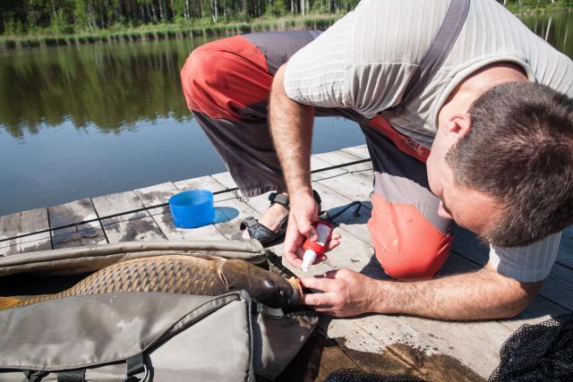 Название: Обработка раны от крючка. Рыбалка 24.05.14г.jpg Просмотров: 48  Размер: 54.6 Кб